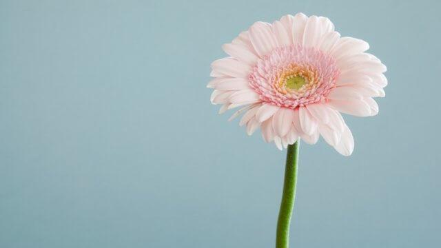 令和 SMAP 世界に一つだけの花